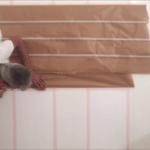 Colocacion de cinta tesa sobre el blanco 2